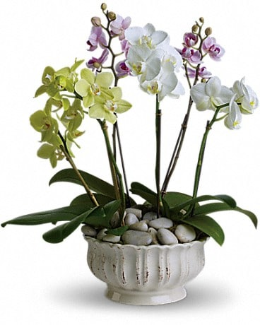 Darling orchids